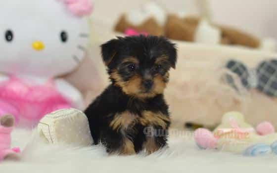 Tilly's Puppy